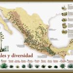 Agaves de Mexico map