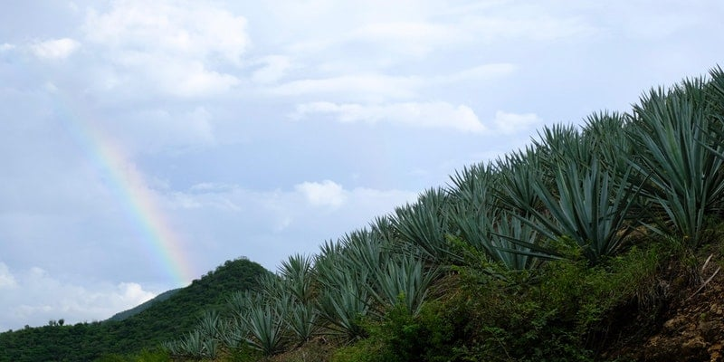 Agave Past, Present & Future: Mezcal and Sustainability – Miami Beach